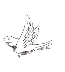 手書き鳥 素材3